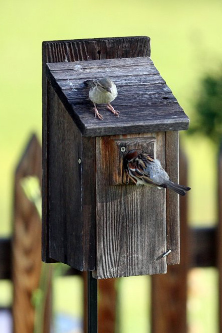 Waterton invented the nesting box